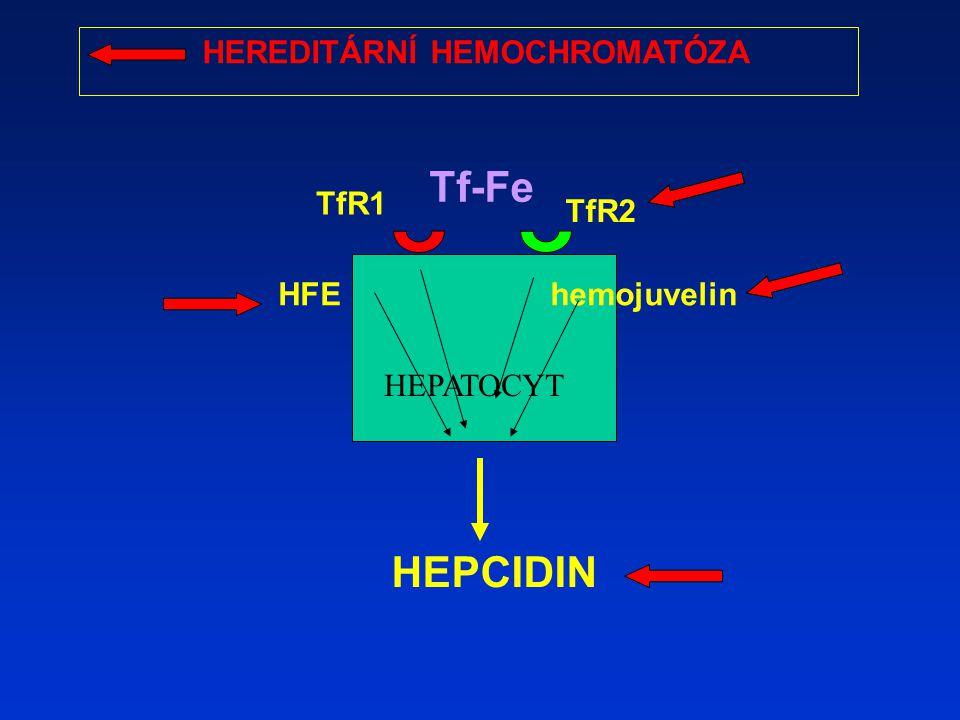 Tf-Fe HEPCIDIN HEREDITÁRNÍ HEMOCHROMATÓZA TfR1 TfR2 HFE hemojuvelin