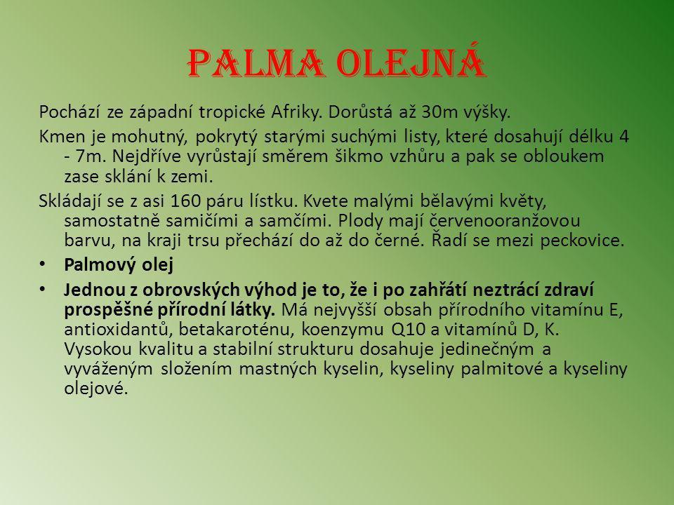 Palma olejná Pochází ze západní tropické Afriky. Dorůstá až 30m výšky.