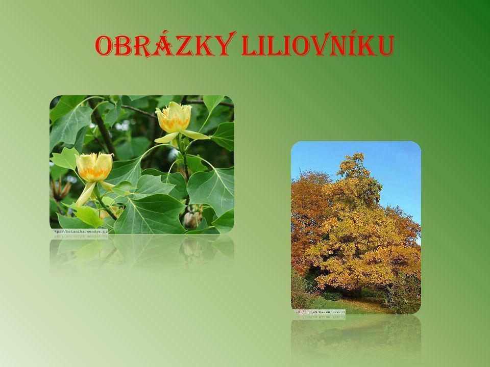 Obrázky liliovníku