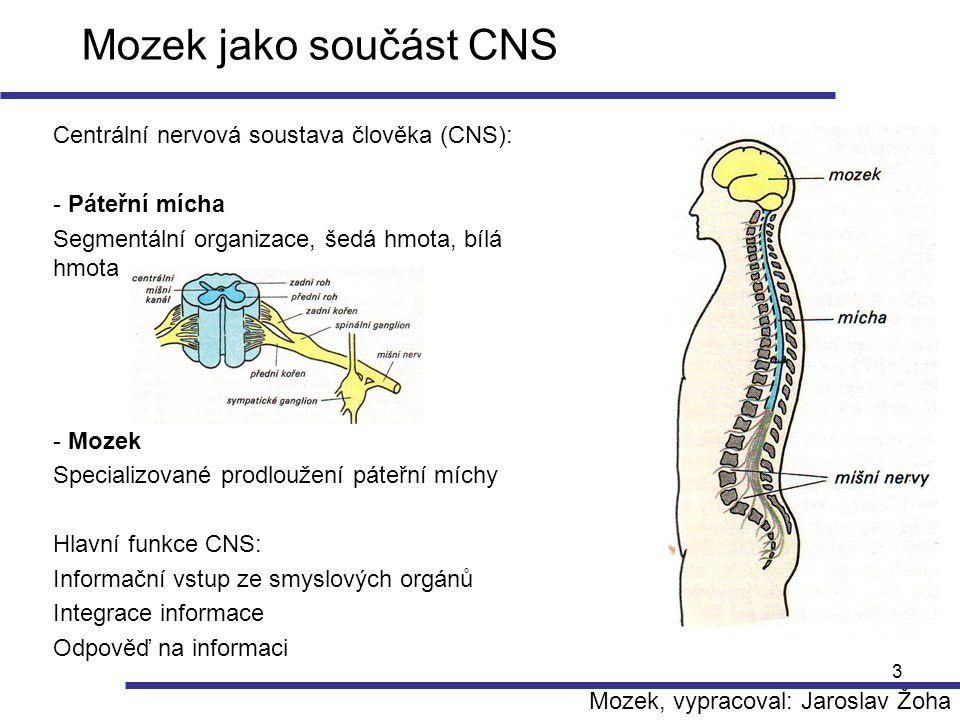 Mozek jako součást CNS Centrální nervová soustava člověka (CNS):