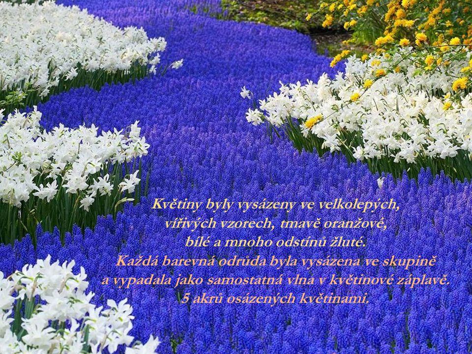 Květiny byly vysázeny ve velkolepých,