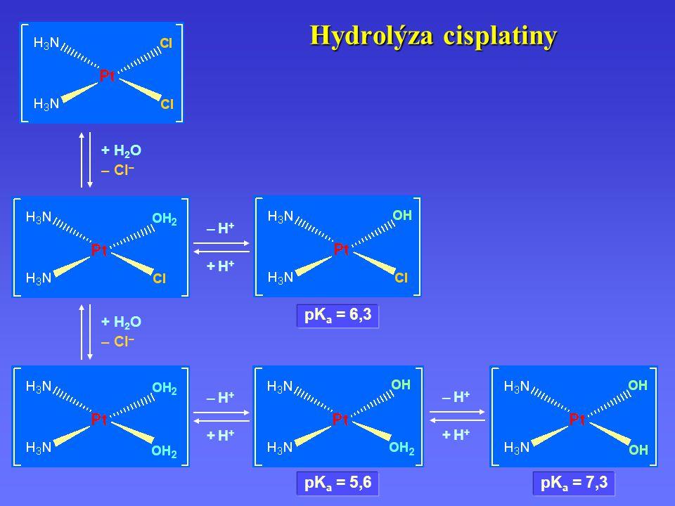Hydrolýza cisplatiny pKa = 6,3 pKa = 5,6 pKa = 7,3 + H2O – Cl– – H+