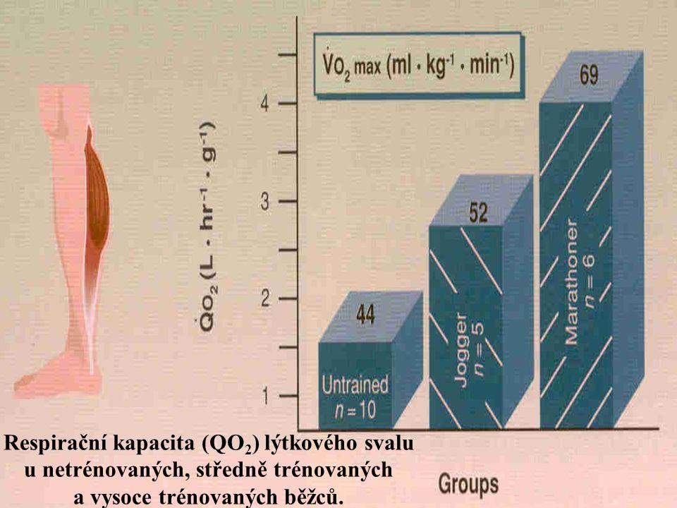 Respirační kapacita (QO2) lýtkového svalu