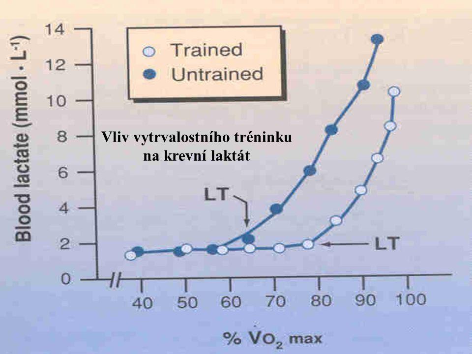 Vliv vytrvalostního tréninku