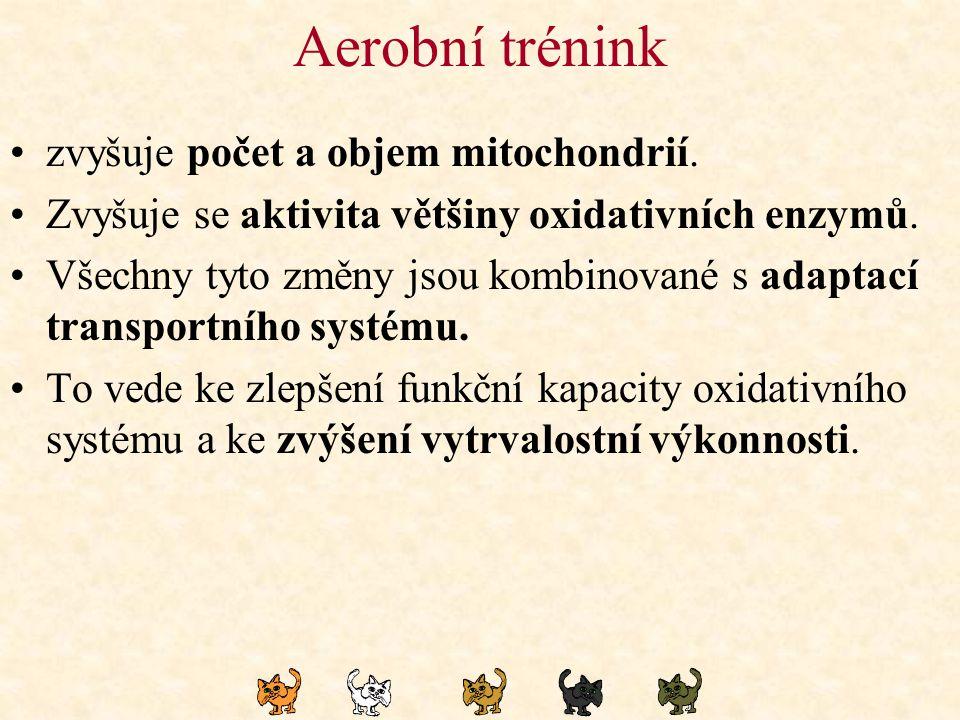 Aerobní trénink zvyšuje počet a objem mitochondrií.