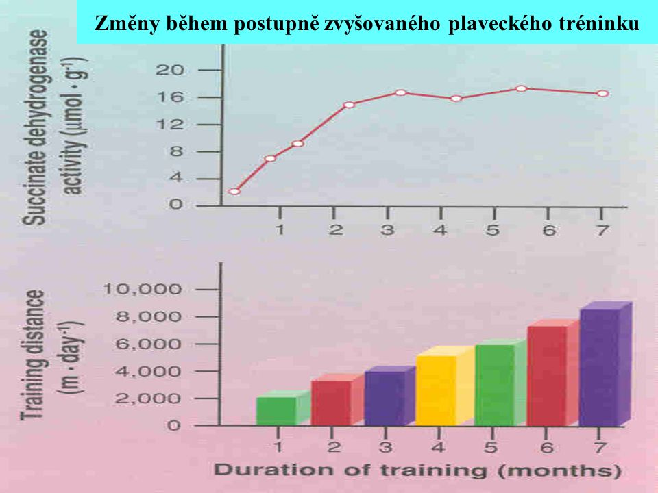 Změny během postupně zvyšovaného plaveckého tréninku