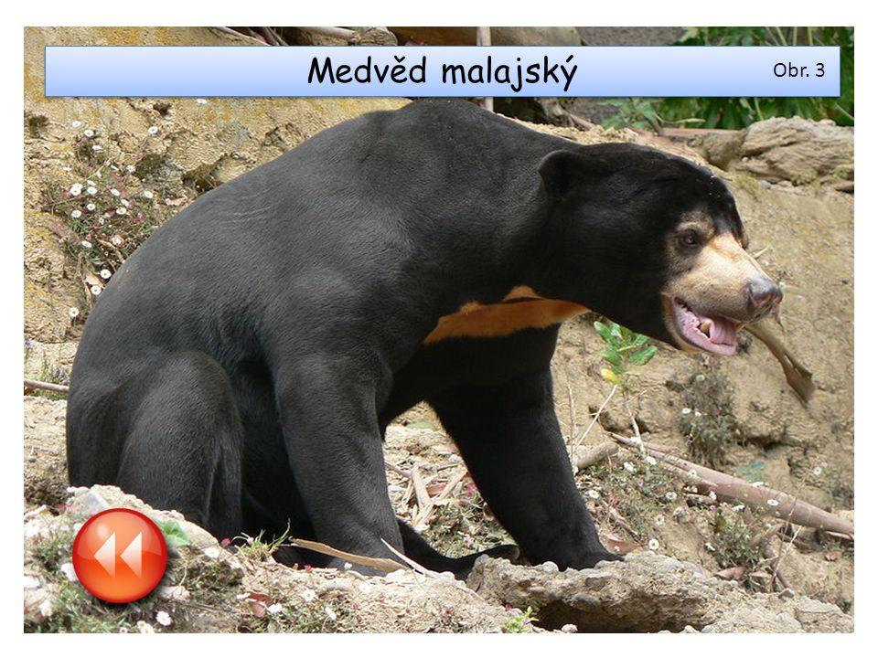 Medvěd malajský Obr. 3