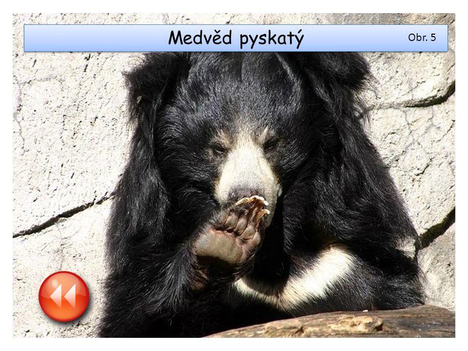 Medvěd pyskatý Obr. 5