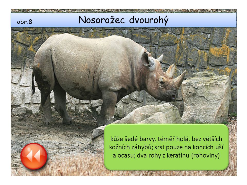 Nosorožec dvourohý obr.8.