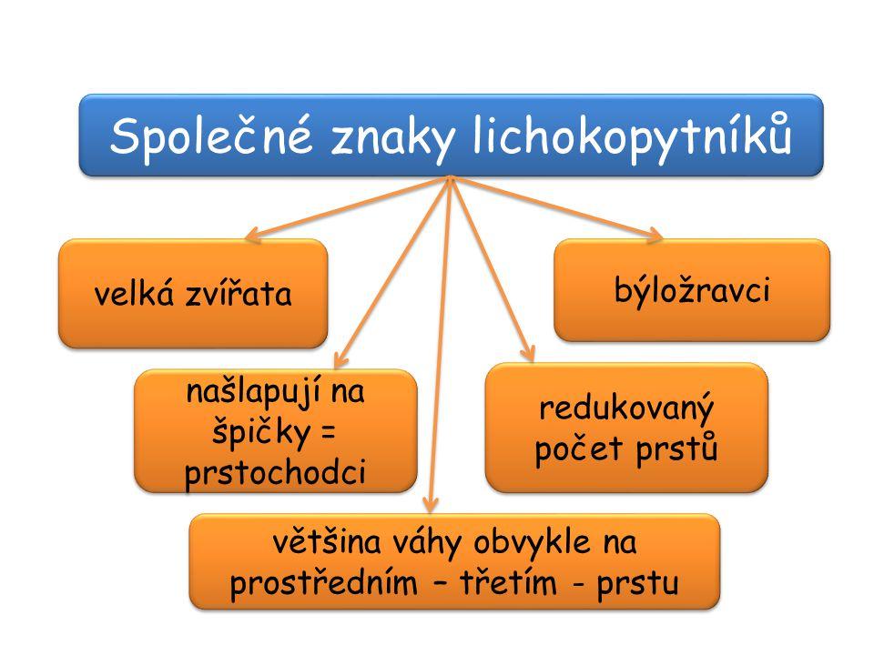 Společné znaky lichokopytníků