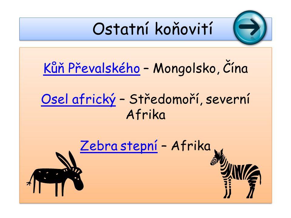 Ostatní koňovití Kůň Převalského – Mongolsko, Čína