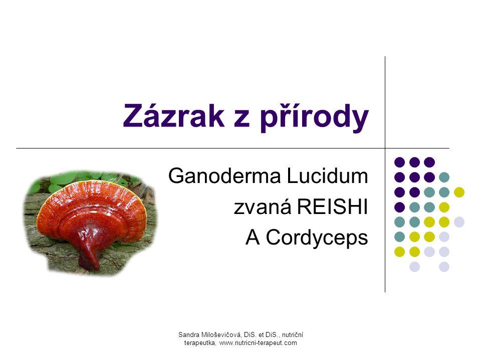 Ganoderma Lucidum zvaná REISHI A Cordyceps