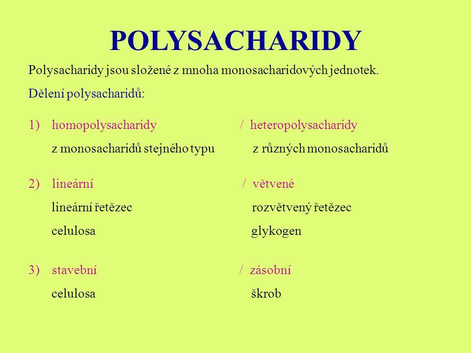 POLYSACHARIDY Polysacharidy jsou složené z mnoha monosacharidových jednotek. Dělení polysacharidů: