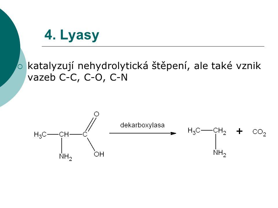 4. Lyasy katalyzují nehydrolytická štěpení, ale také vznik vazeb C-C, C-O, C-N