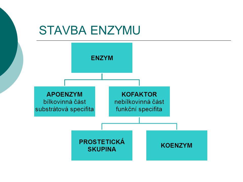 substrátová specifita