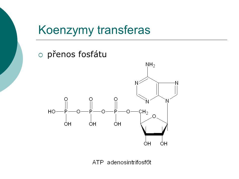 Koenzymy transferas přenos fosfátu