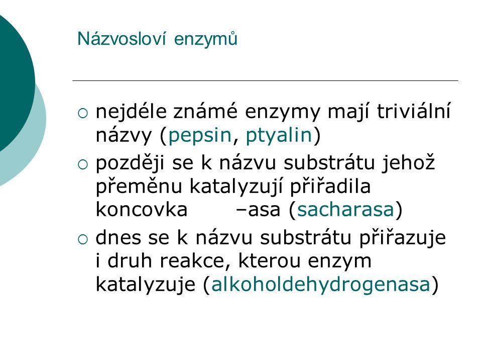 nejdéle známé enzymy mají triviální názvy (pepsin, ptyalin)