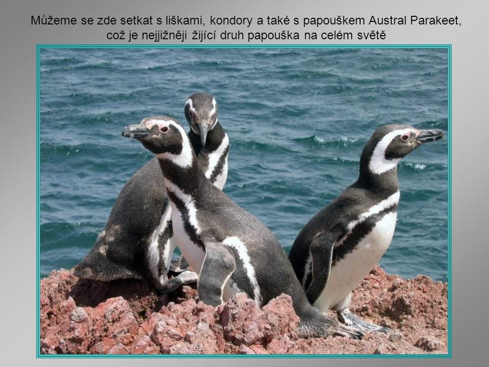 Můžeme se zde setkat s liškami, kondory a také s papouškem Austral Parakeet, což je nejjižněji žijící druh papouška na celém světě