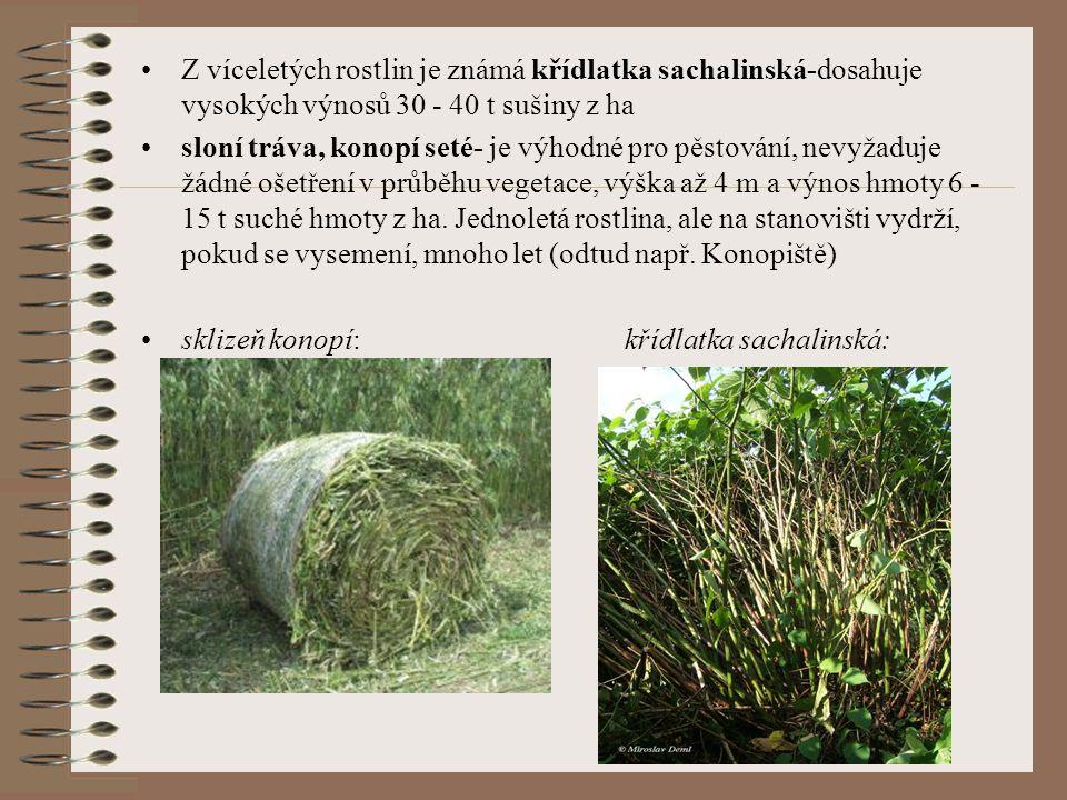 Z víceletých rostlin je známá křídlatka sachalinská-dosahuje vysokých výnosů 30 - 40 t sušiny z ha