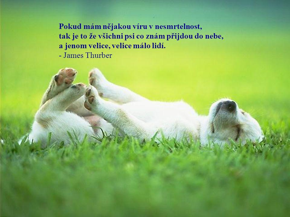 Pokud mám nějakou víru v nesmrtelnost, tak je to že všichni psi co znám přijdou do nebe,