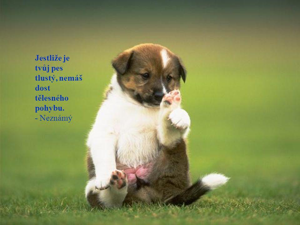 Jestliže je tvůj pes tlustý, nemáš dost tělesného pohybu.