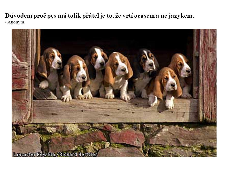 Důvodem proč pes má tolik přátel je to, že vrtí ocasem a ne jazykem.