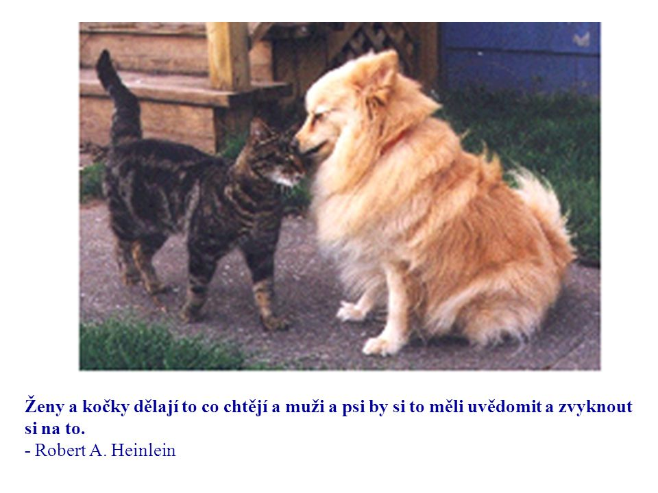 Ženy a kočky dělají to co chtějí a muži a psi by si to měli uvědomit a zvyknout si na to.