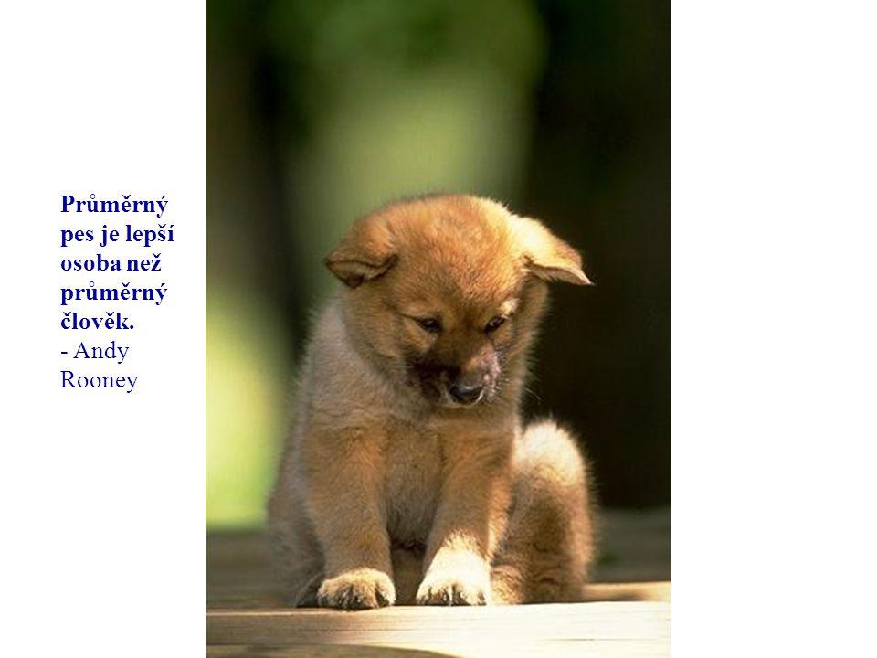 你默默的回首 Průměrný pes je lepší osoba než průměrný člověk. - Andy Rooney