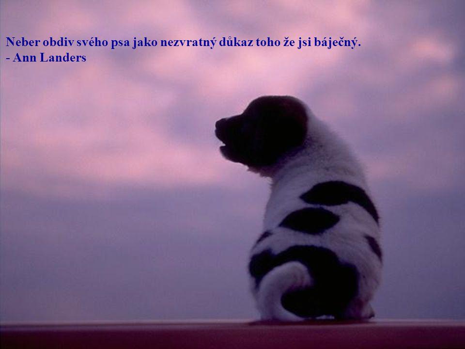 Neber obdiv svého psa jako nezvratný důkaz toho že jsi báječný.