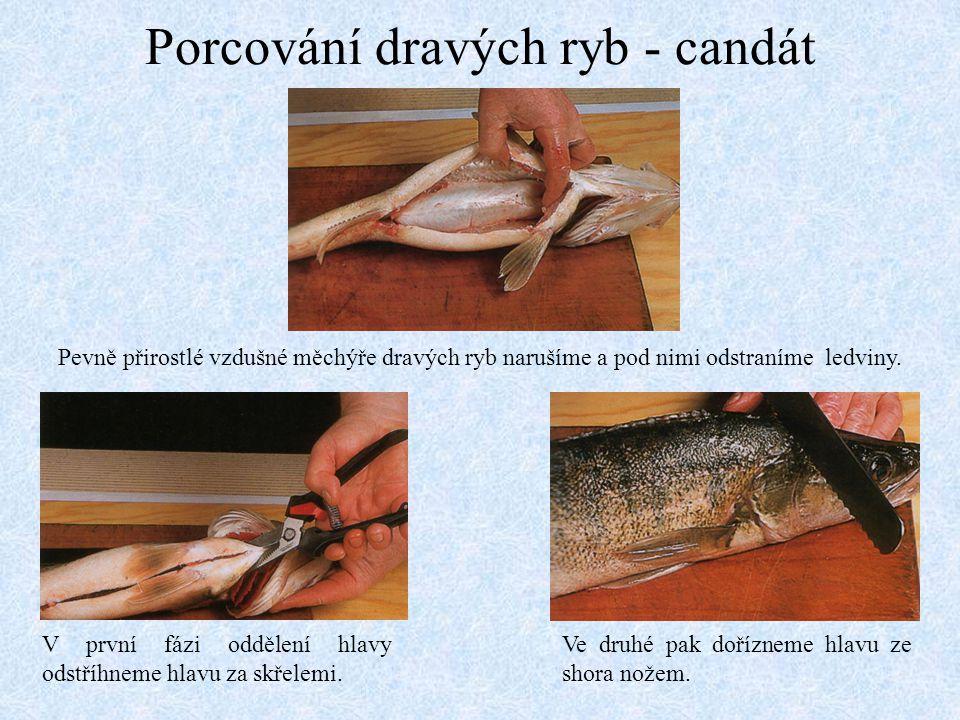 Porcování dravých ryb - candát