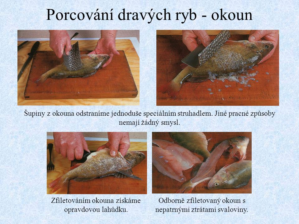 Porcování dravých ryb - okoun