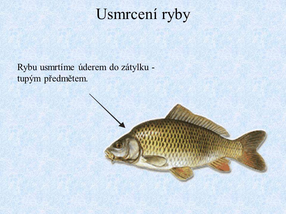 Usmrcení ryby Rybu usmrtíme úderem do zátylku - tupým předmětem.