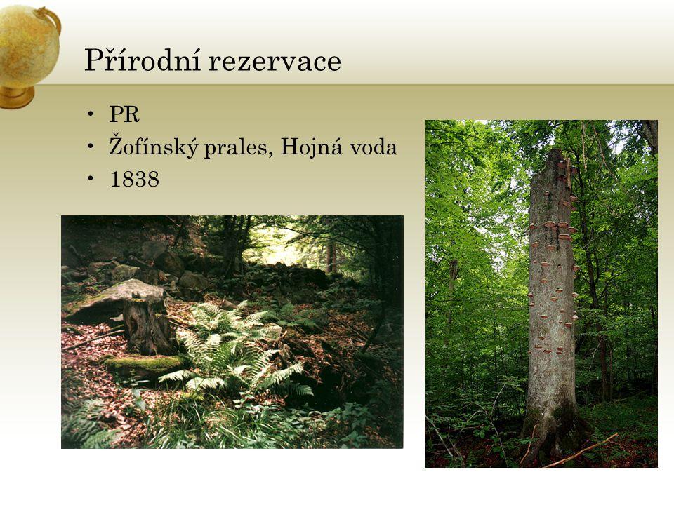 Přírodní rezervace PR Žofínský prales, Hojná voda 1838