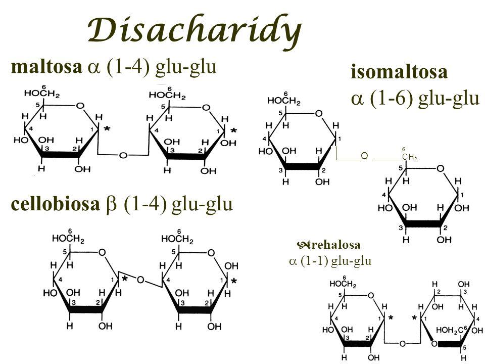 Disacharidy maltosa (1-4) glu-glu isomaltosa (1-6) glu-glu