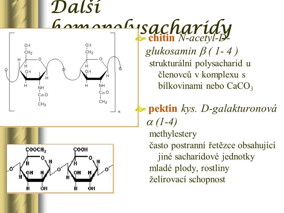 Další homopolysacharidy