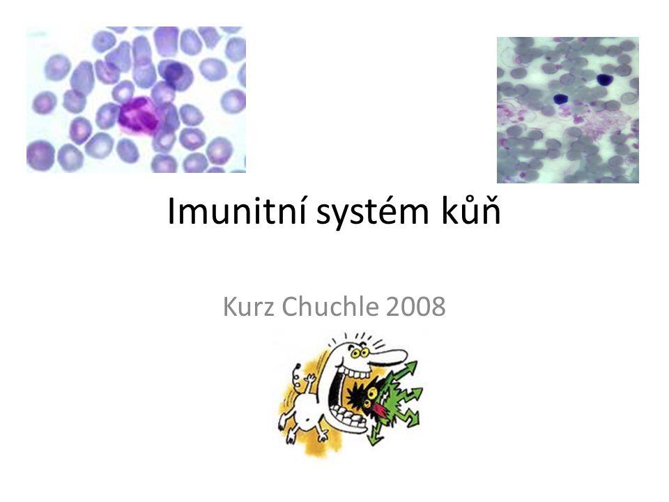 Imunitní systém kůň Kurz Chuchle 2008