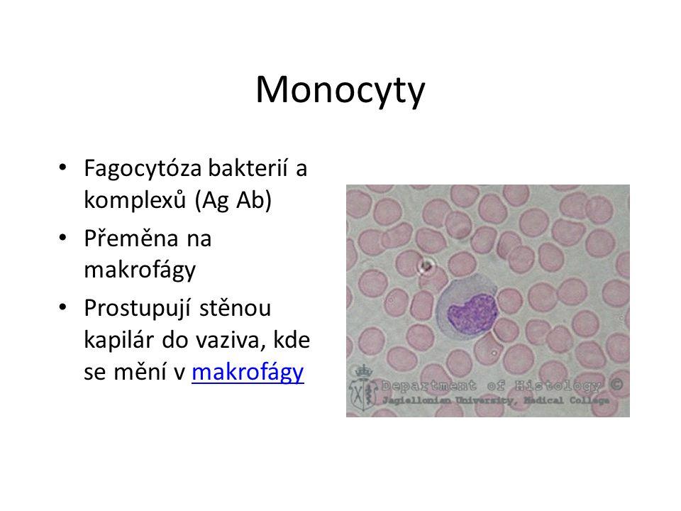 Monocyty Fagocytóza bakterií a komplexů (Ag Ab) Přeměna na makrofágy