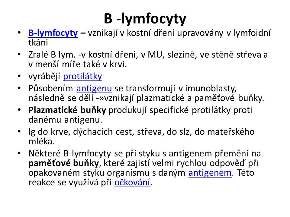 B -lymfocyty B-lymfocyty – vznikají v kostní dření upravovány v lymfoidní tkáni.