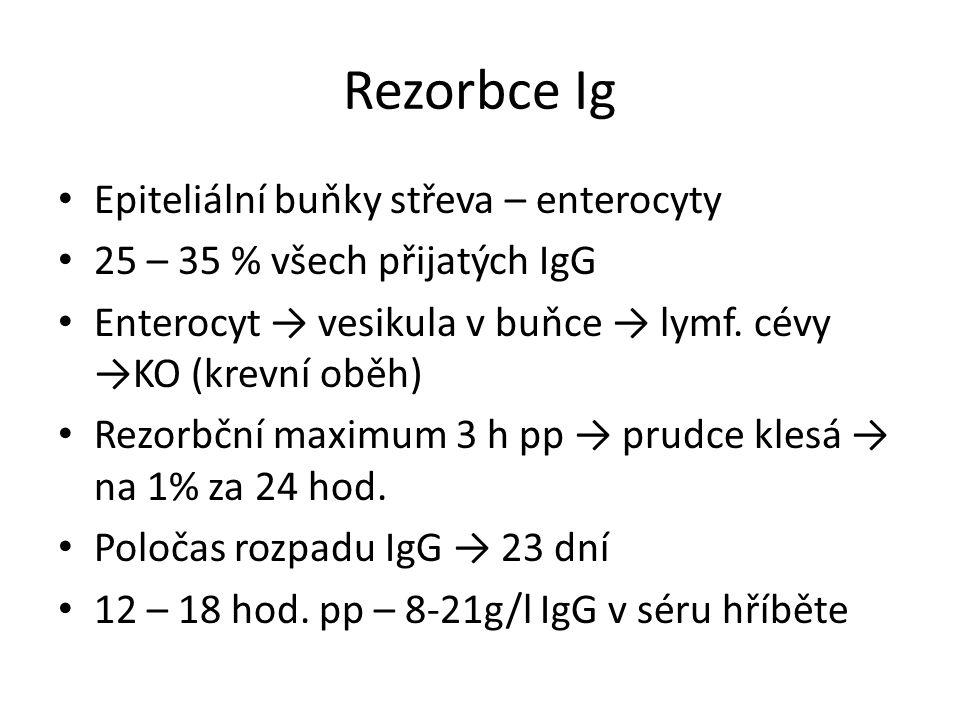 Rezorbce Ig Epiteliální buňky střeva – enterocyty