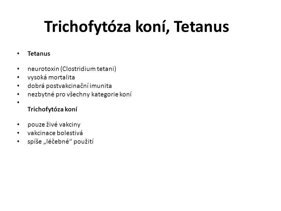 Trichofytóza koní, Tetanus