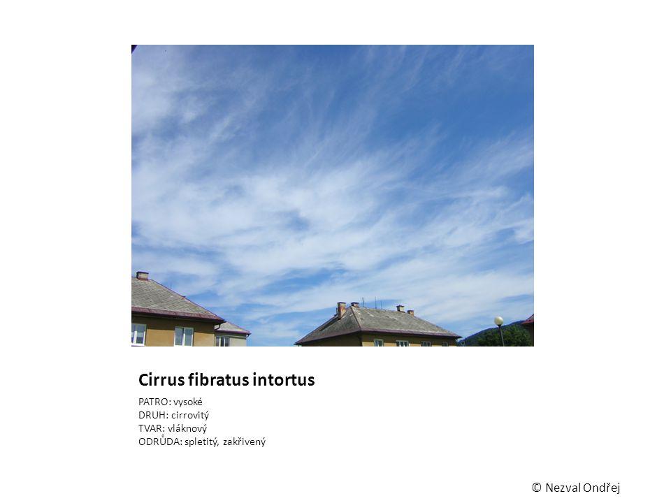 Cirrus fibratus intortus