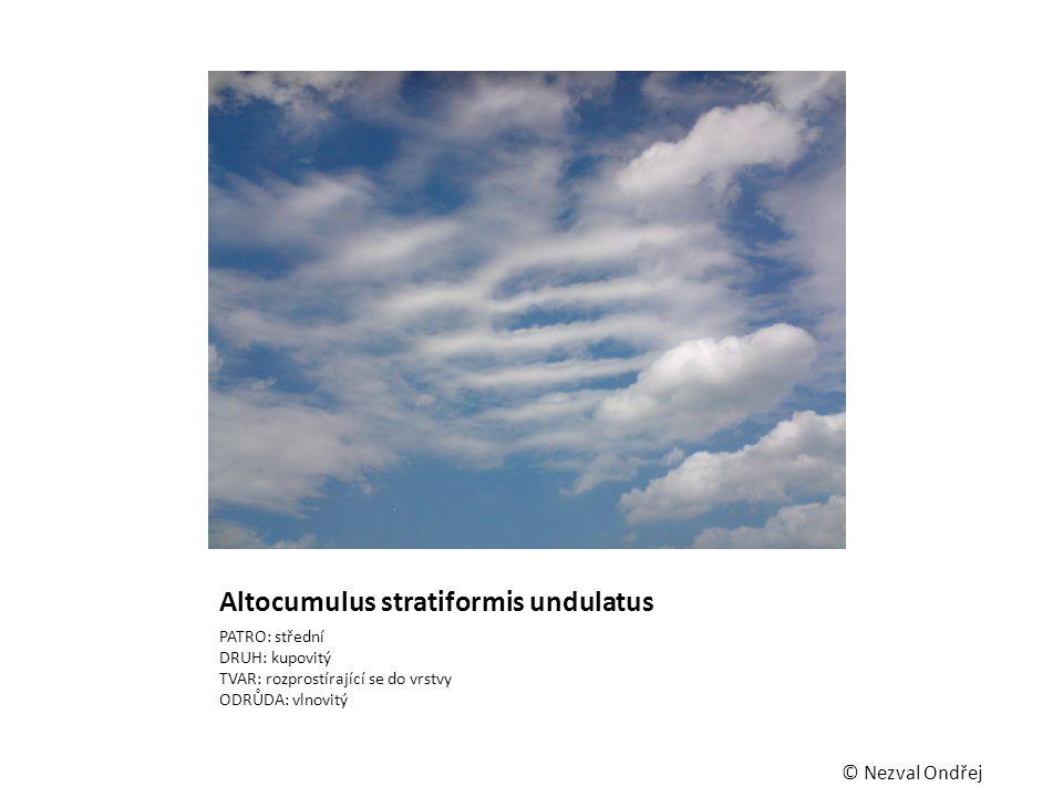 Altocumulus stratiformis undulatus