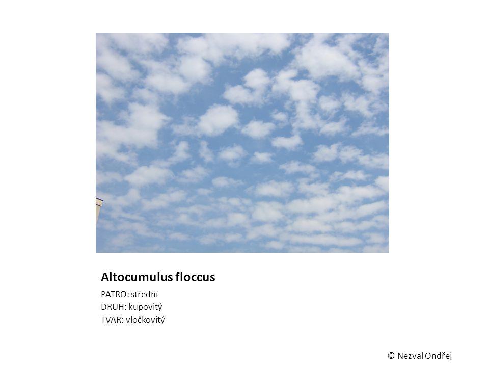 Altocumulus floccus PATRO: střední DRUH: kupovitý TVAR: vločkovitý