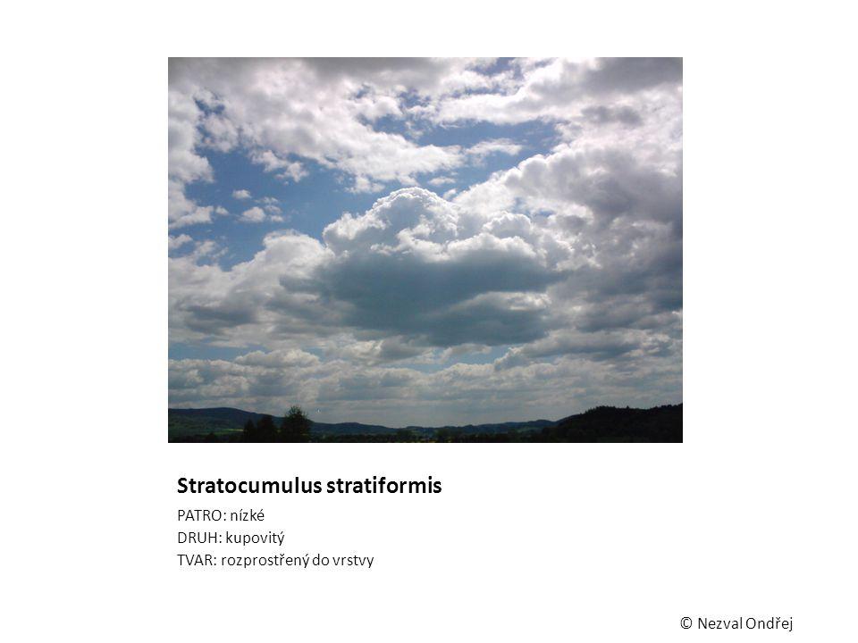 Stratocumulus stratiformis