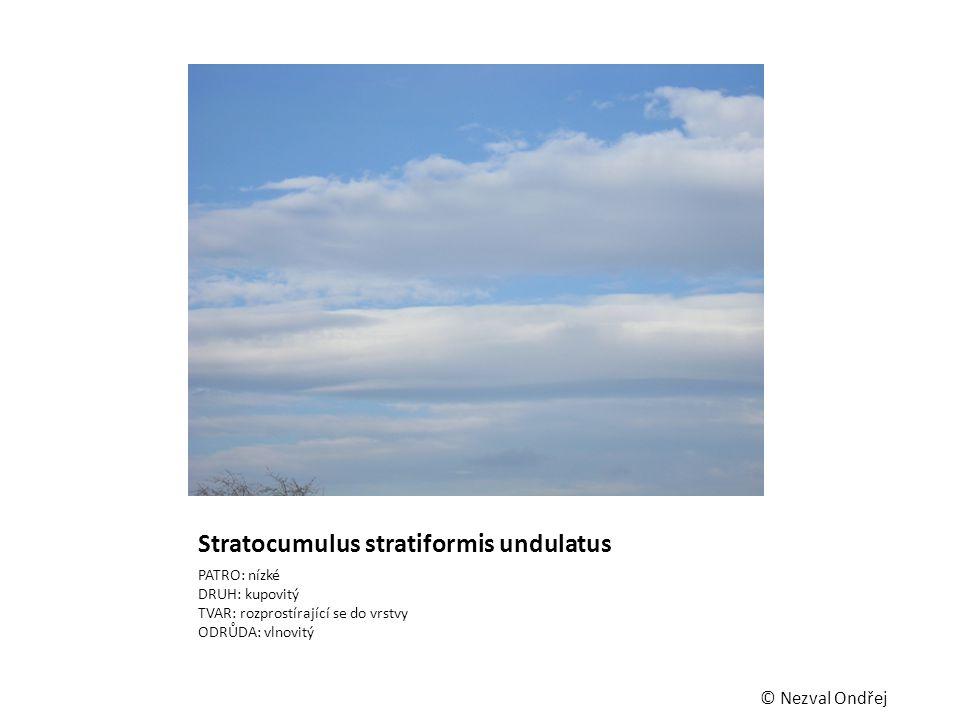 Stratocumulus stratiformis undulatus