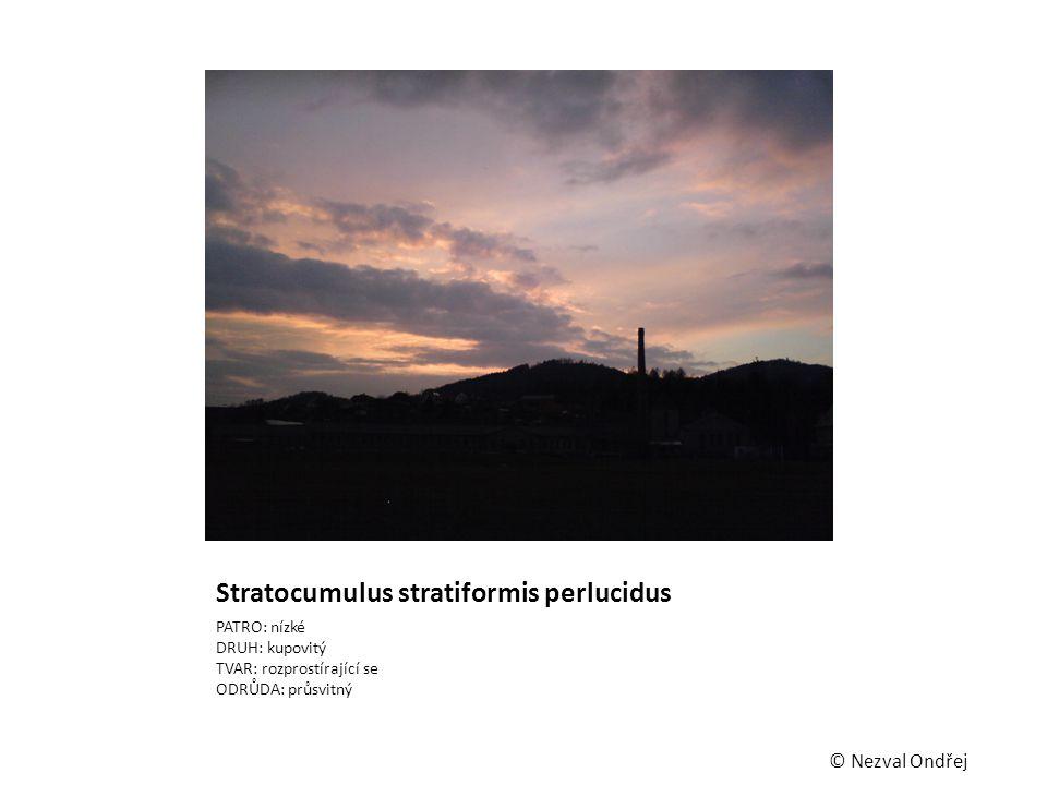 Stratocumulus stratiformis perlucidus