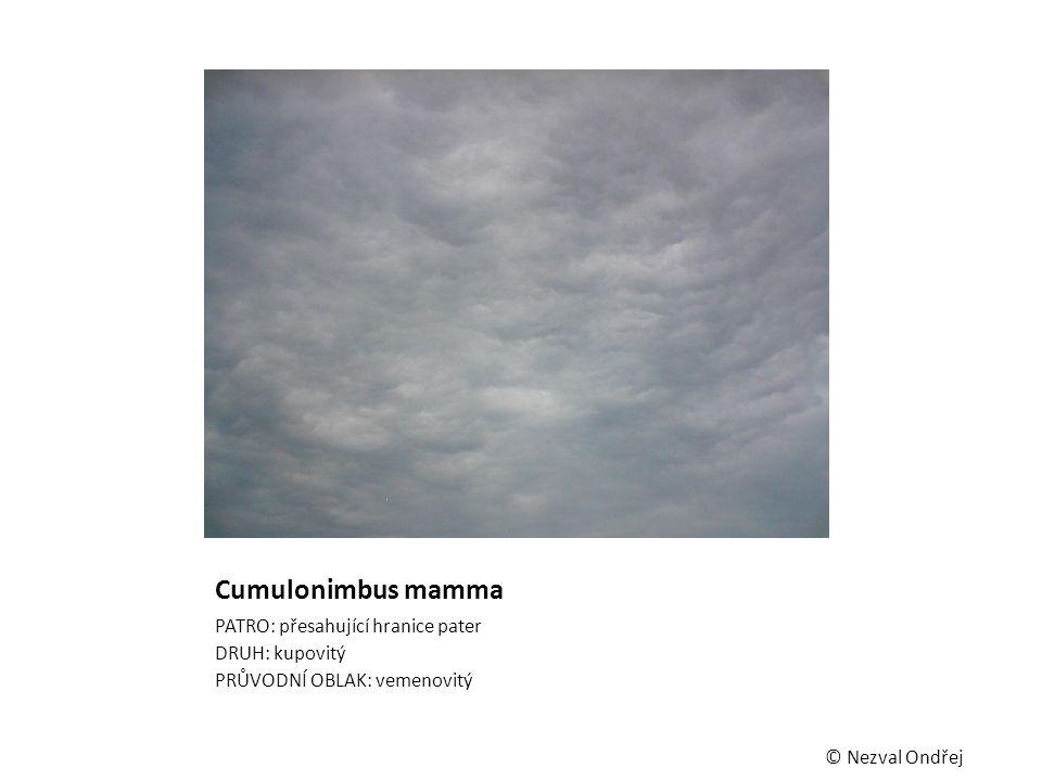 Cumulonimbus mamma PATRO: přesahující hranice pater DRUH: kupovitý