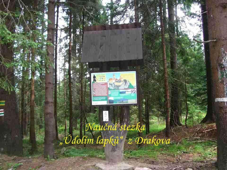 """Zřícený kostel sv.Marty v lese nad """"Horním Údolím"""