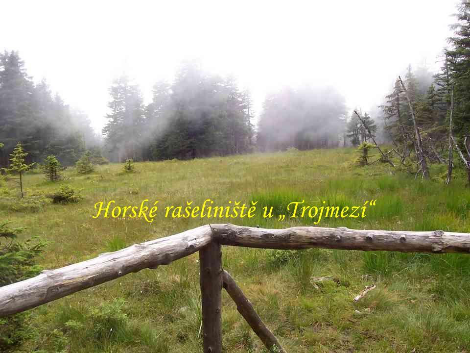 """Horské rašeliniště u """"Trojmezí Vrchol """"Keprníku (1423m)"""