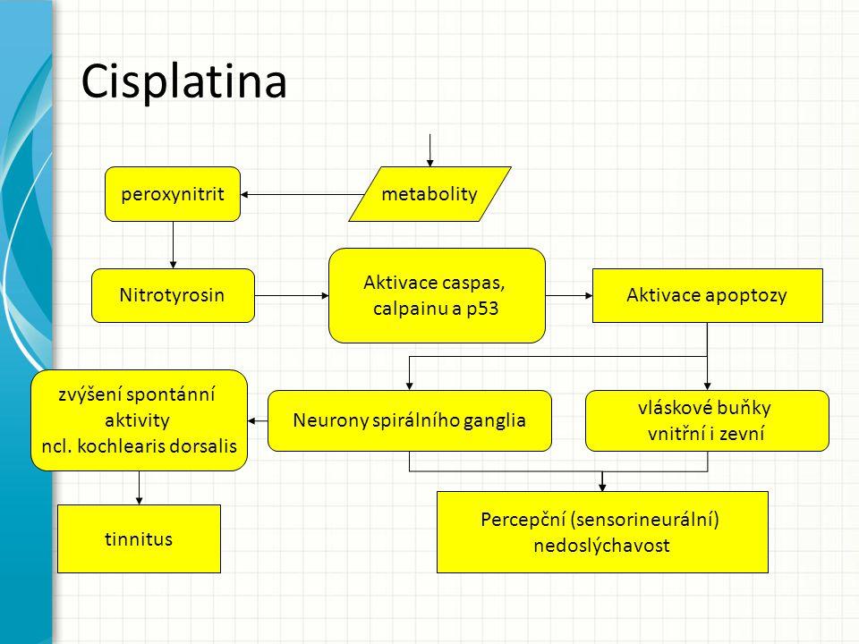 Cisplatina peroxynitrit metabolity Aktivace caspas, calpainu a p53